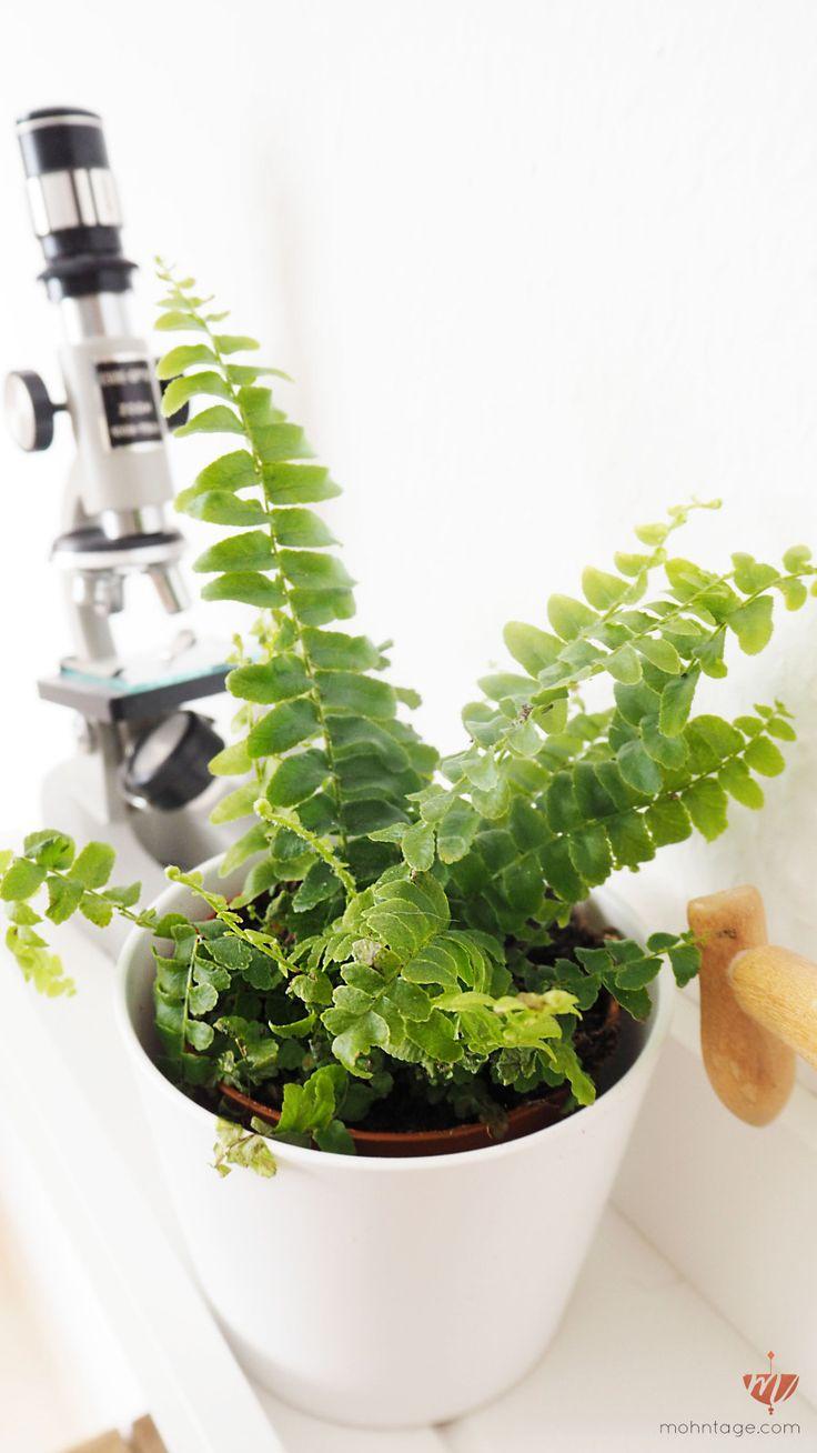 10 besten Ungiftige Pflanzen Bilder auf Pinterest   Digitalkameras ...