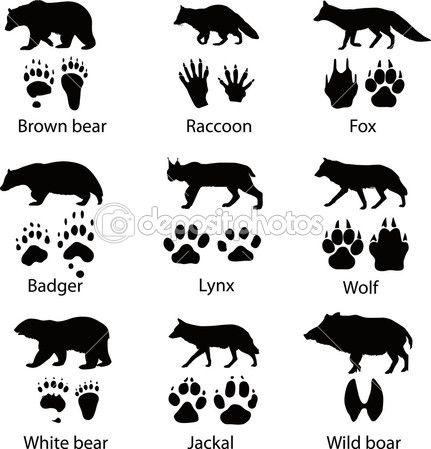Животные и его треки. Векторные иллюстрации — стоковая иллюстрация #9710797