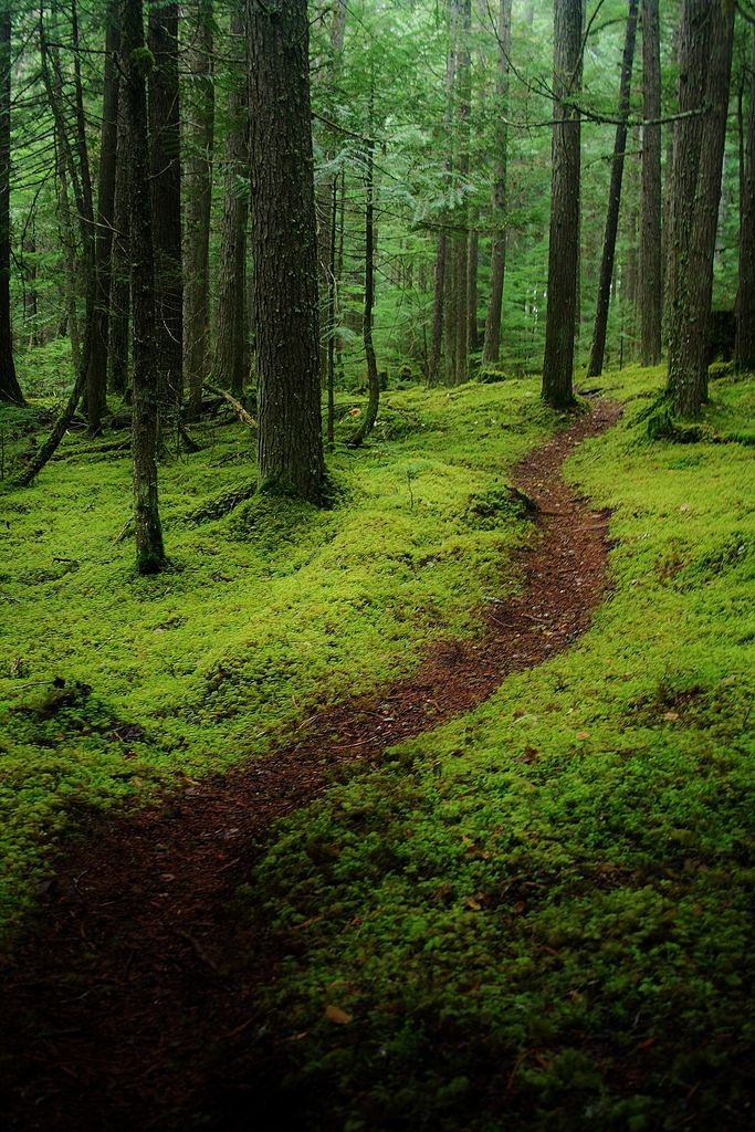 The green carpet of the forest british columbia canada for Columbia woods