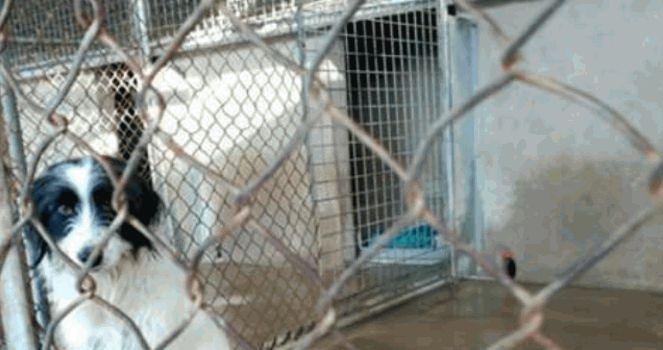 Prohibir la venta de perros mientras las protectoras estén llenas de perros abandonados