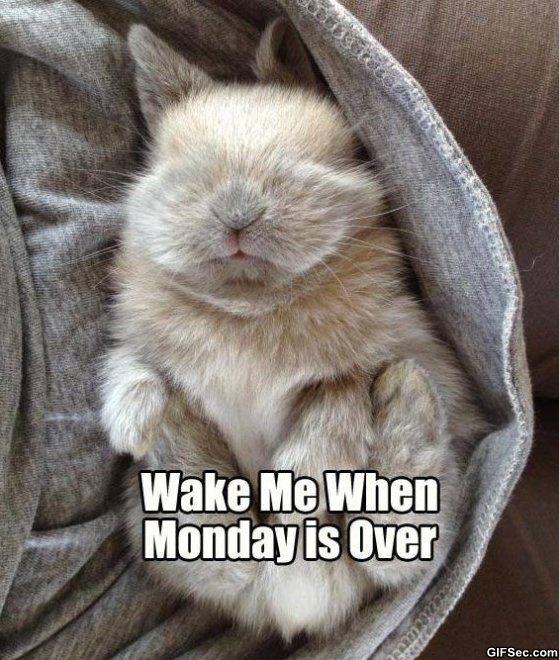 adorable sleeping bunny!!!!