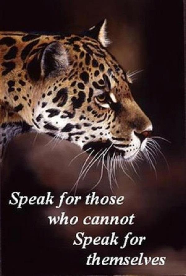 Speak for those who cannot speak  for themselves.