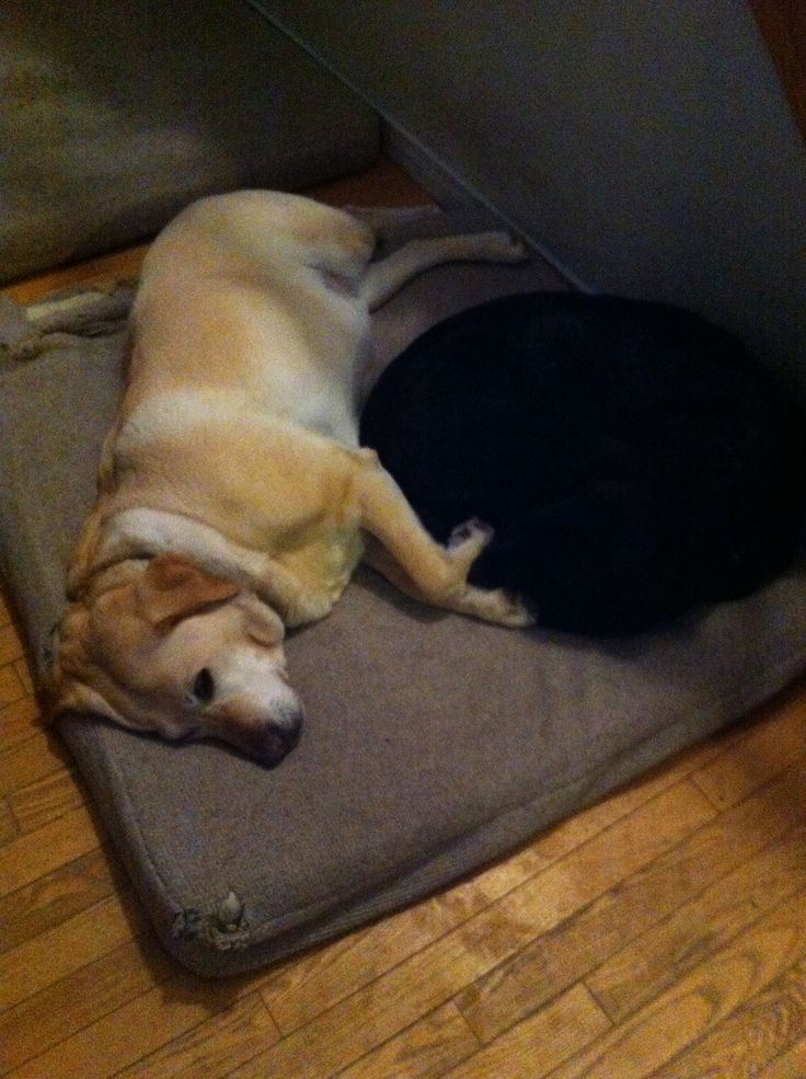 They share 1 bed even though they each have their own