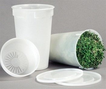 seeds.toddsseeds.com - Sprouting Starter Kit - Easy Sprouter and 1lb Broccoli, Radish, Alfalfa Seed Mix, $20.78 (http://seeds.toddsseeds.com/sprouting-starter-kit-easy-sprouter-and-1lb-broccoli-radish-alfalfa-seed-mix/)