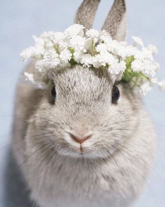 Happy first day of Spring!!! Somebunny loves you!!!  #springisintheair #firstdayofspring #freshair #flowers