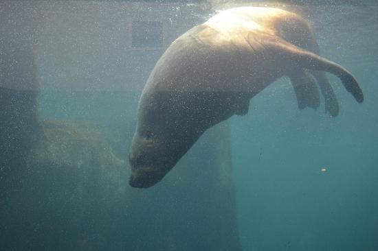 sealife center alaska