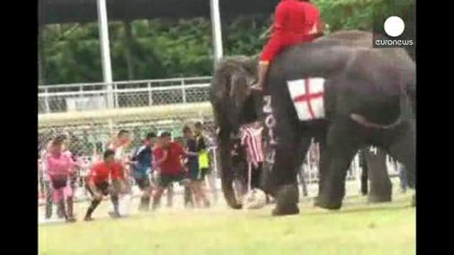 Los elefantes tailandeses también juegan el Mundial