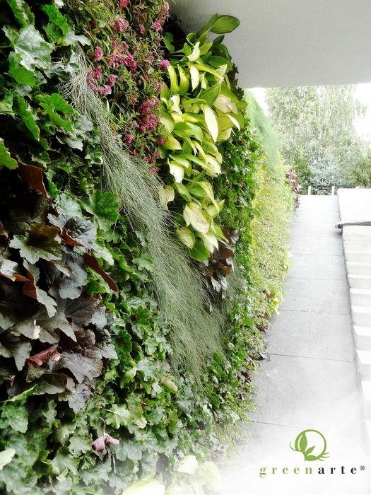 Zewnętrzna zielona ściana, zielona rama z widokiem na ogród - wrzesień 2012
