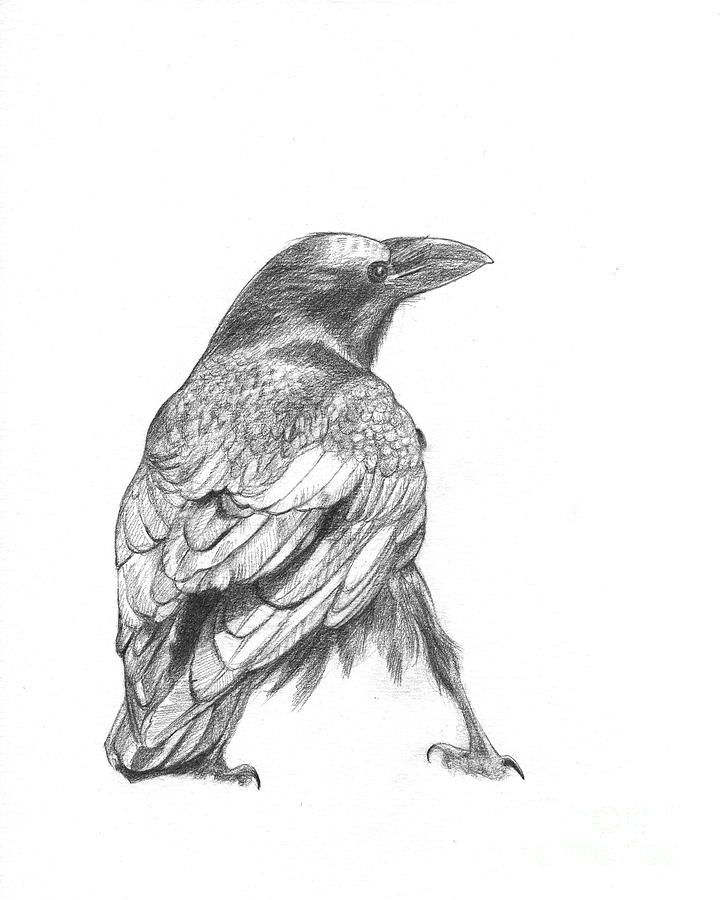 Line Drawing Raven : Best crow drawing images on pinterest crows ravens