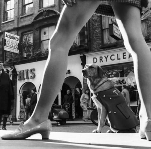 60's london, miniskirt   - via Melissa Glass, all I see is the dog in his ill fitting coat, looking so patient.