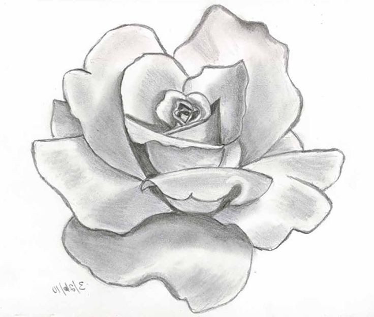 Flower drawings with pencil best drawing sketch ideas