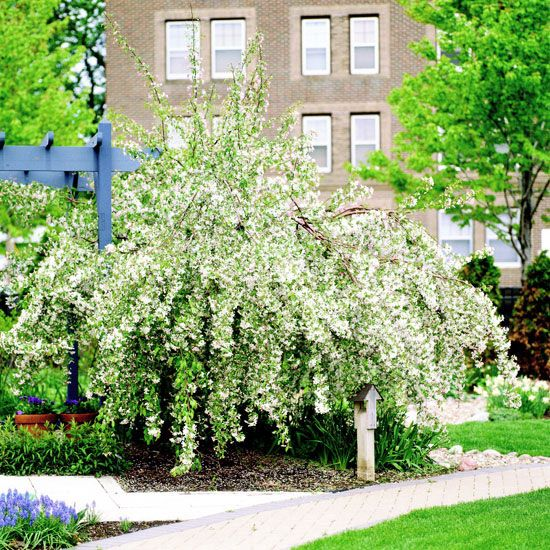 30 Best Gardening Growing Fruit Images On Pinterest Fruit Trees Gardening And Orchards