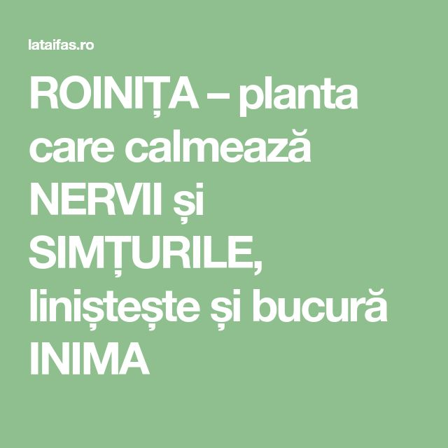 ROINIȚA – planta care calmează NERVII și SIMȚURILE, liniștește și bucură INIMA
