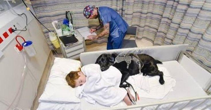 No hay duda de que el mejor amigo del hombre es el perro, y para muestra tenemos a Mahe, un labrador negro que nunca se separa de su dueño de 9 años, James Isaac, un pequeño que sufre de autismo, por lo que es común que en esta enfermedad no se quiera el contacto de nadie, a excepción de su mejor amigo, quien lo tranquiliza y acompaña a lo largo de su tratamiento.