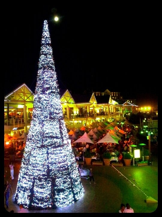 Christmas tree in Cape Town