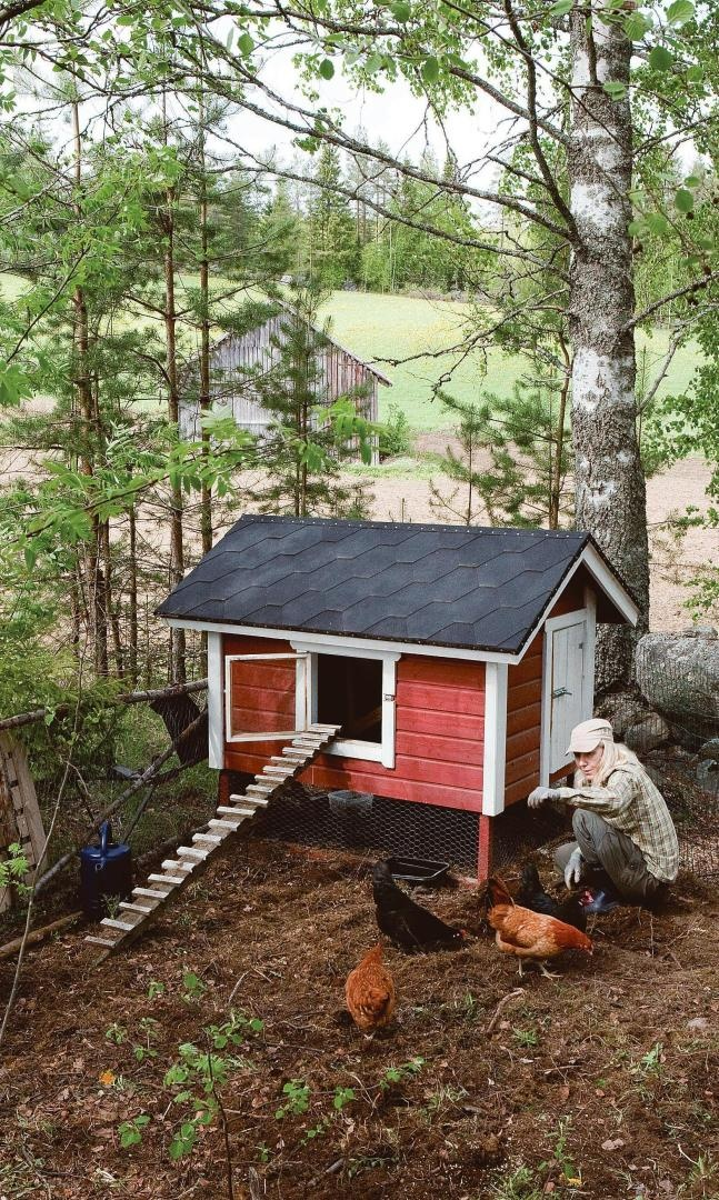 Best Chicken Coop Images On Pinterest Backyard Chickens