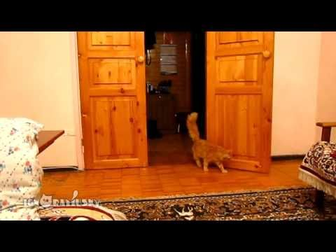 Laughed so hard I cried!!!! A Scared Cat Leaps Whenever the Mario Jump Sound Effect is Played