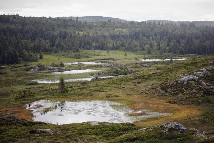 "from ""Into the Wild."" Landscape near Fäviken. Photo by Eric Olsson, courtesy Phaidon"