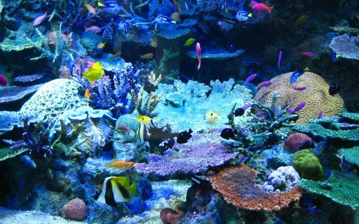64 best images about underwater on pinterest for Saltwater fish names