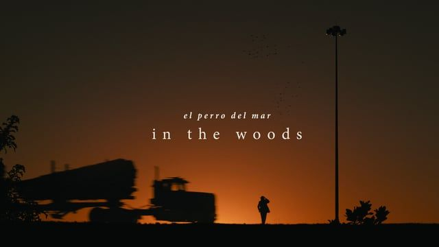 "http://pitchfork.com/news/64405-el-perro-del-mar-shares-epic-in-the-woods-video/  Written, Directed and Edited by Connor Hurley Director of Photography Peter Steusloff Camera Assistant Chelsea Soby 2nd Camera Assistant Thomas Lau  Featuring Tressler Burton  ""In The Woods"" written and performed by El Perro Del Mar. Taken from the album El Perro Del Mar Deluxe Edition (2015) released by The Control Group.   www.connorhurley.com"