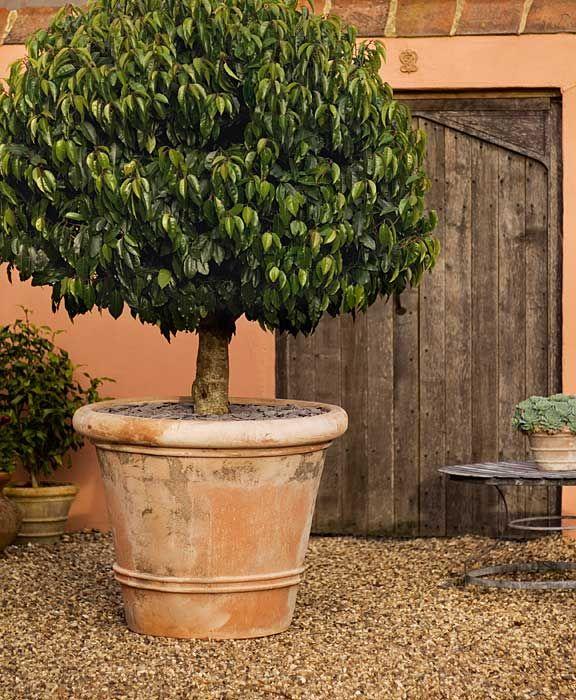Italian terrace terracotta garden pots urns for Terrace trees