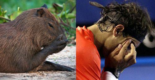 unhappy capybara