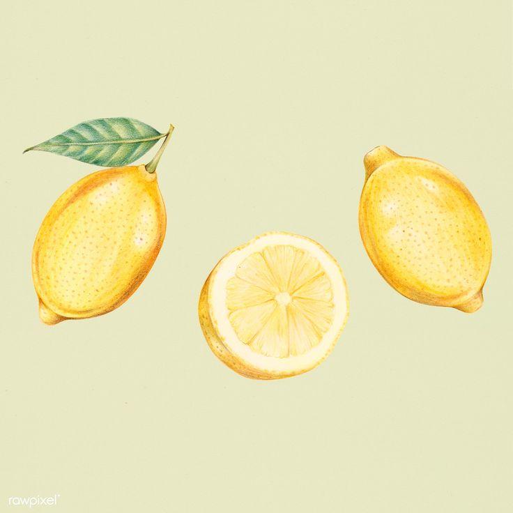 Download <b>premium</b> illustration of Illustration of isolated lemons in ...