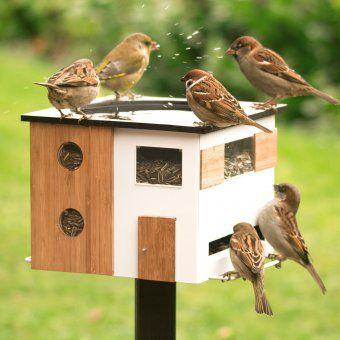 Vogelfutterhaus mit Bad