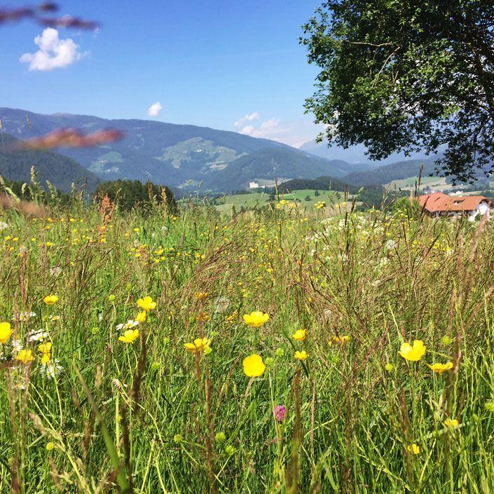 Der Messnerhof in Stefansdorf gehört mit zu den schönsten Orten, an denen ich jemals mit meiner Familie war. Ein kleiner Bauernhof, der zum Verbund Roter Hahn gehört. Wer hier mit der Familie Urlaub macht, möchte nie wieder gehen. Das ist die perfekte Auszeit. Herzlichkeit wird groß geschrieben und Kinderfreundlichkeit sowieso. Ein toller Urlaubsort für die ganze Familie.