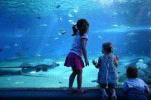 Ripley's Aquarium of the Smokies in Gatlinburg has over 10,000 exotic sea creatures for the whole family to enjoy