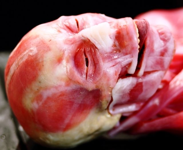 This freakish skinless body is actually a synthetic human cadaver