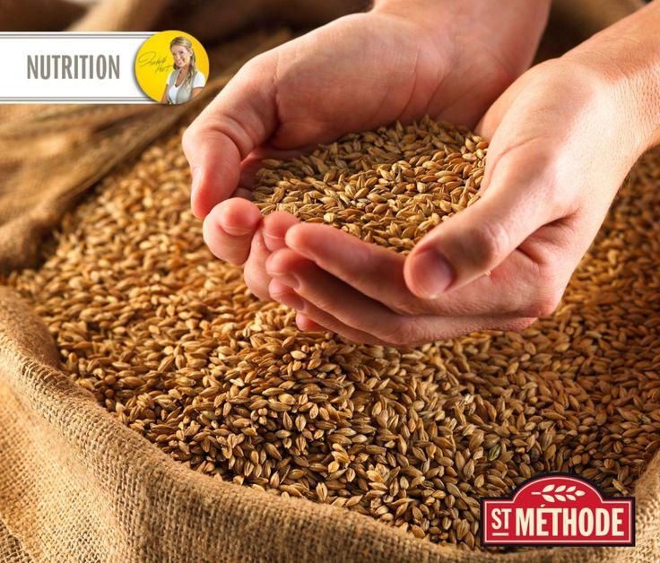 Les grains entiers, bien plus que des fibres! // Whole grains, so much more than fibres!