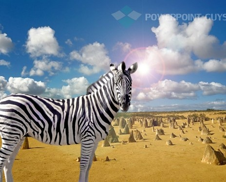 14 best animal powerpoint template images on pinterest templates zebra powerpoint template toneelgroepblik Gallery