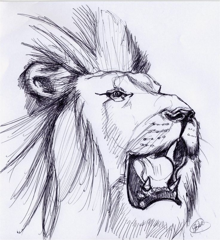LION ROARING SKETCH by ~noahstormcrow on deviantART