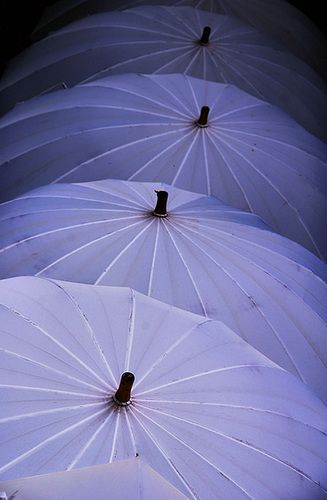 Western style umbrella, but used by priests at Hongu Taisha....© ojisanjake