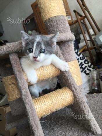 regalo-gatto-gattino-gattina-gatta