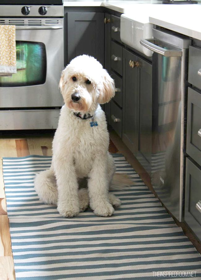 Like the gray kitchen cabinets and the farm sink. Oh, and the goldendoodle is cute too. :D