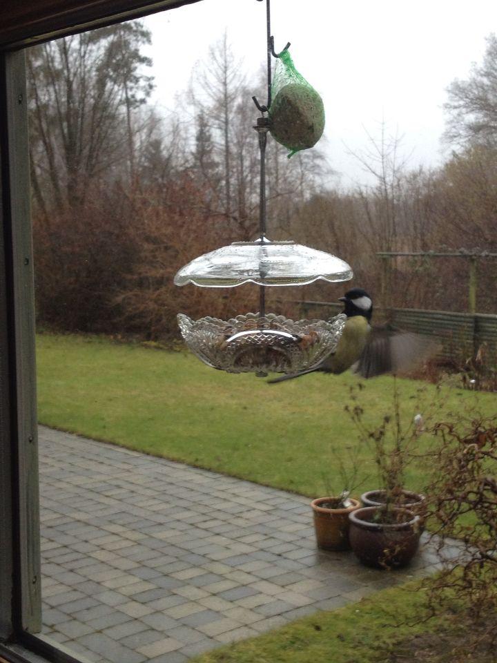 Lille musvit i min Birdfeeder