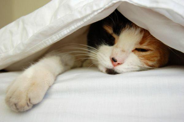 Wygodna poduszka to ważny aspekt zdrowego snu. Poduszka z łusek prosa jest ciekawą alternatywą dla poduszek klasycznych. W 100% naturalna.  #rytmynatury #poduszka #wygodna #zdrowy #sen #poduszkazprosa