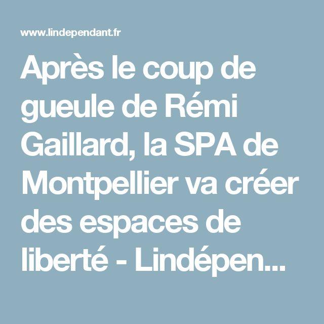 Après le coup de gueule de Rémi Gaillard, la SPA de Montpellier va créer des espaces de liberté - Lindépendant.fr