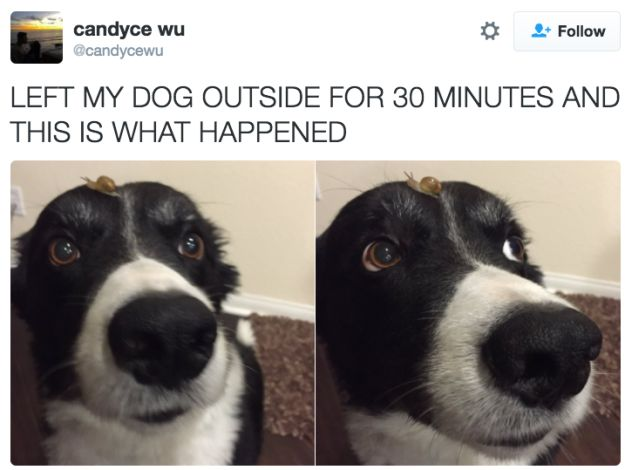 This dog being at one with nature. | 21 Pictures That Prove Dogs Are Actually Completely Perfect