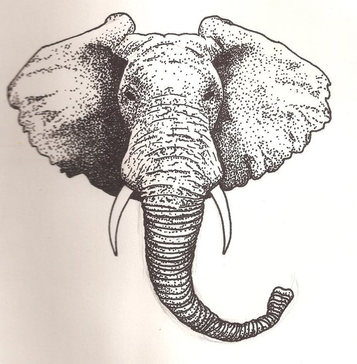 elephant face drawing - photo #16