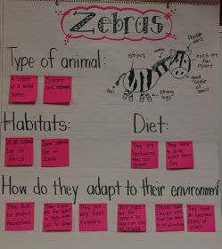 Aren't these zebras the cutest things ever?  This is a picture of our venn diagram about giraffes and zebras.  Our zebra information chart....