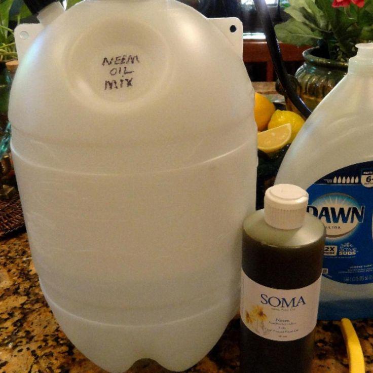 Neem Oil Spray For Garden Pests & Fungal Disease