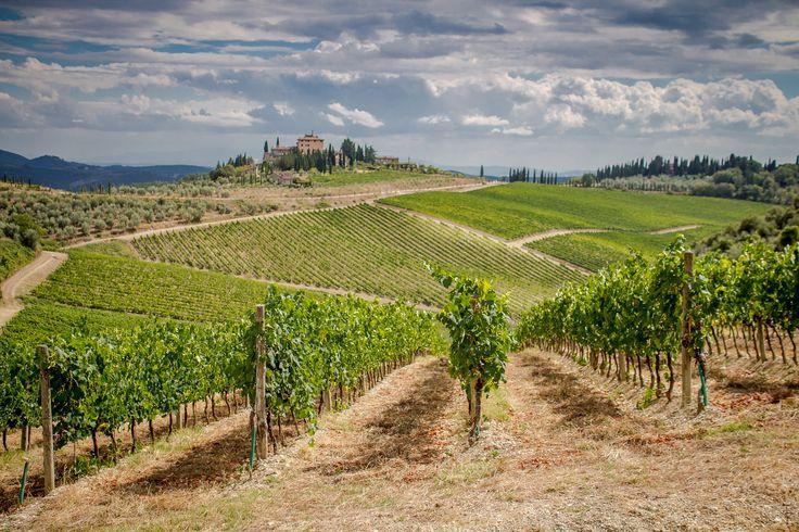 Tuscany Vineyard by Nick Powell