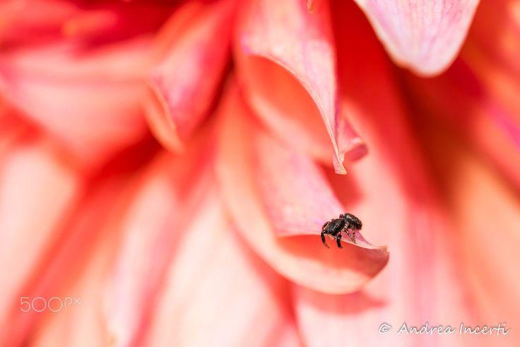 Spider on flower - null