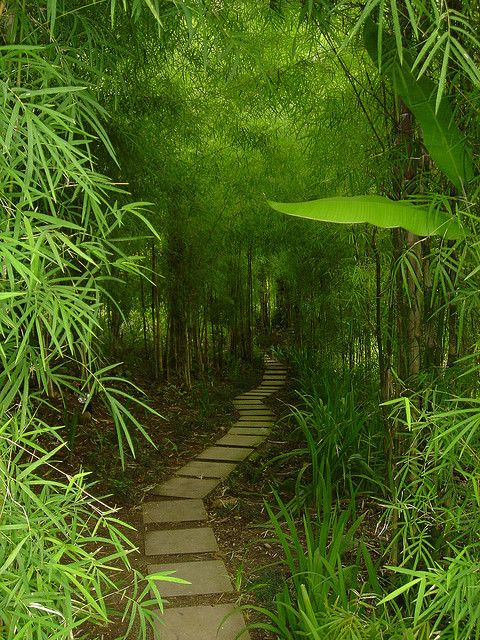 Bamboo Trail  This trail leads to the Ayung River and a waterfall feeding it in Bali Indonesia