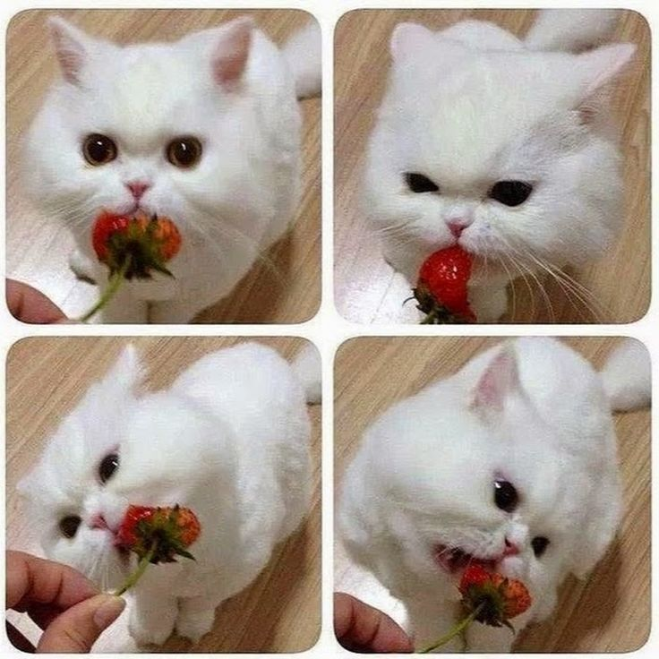 Котик ест клубнику