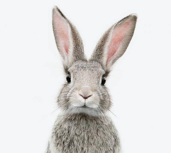 Rabbit Print Bunny Wall Art Nursery Decor Woodlands Nursery Susseste Haustiere Ausgestopftes Tier Tierbabys