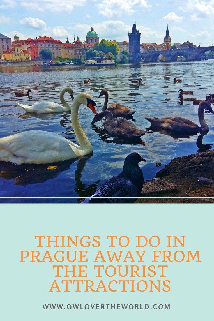 There are many awesome things to do in Prague, but the ones away from the tourist attractions that you will find here are special and unique.    Things to do in Prague away from the tourist attractions / Non touristy things to do in Prague / Things to do in Prague / Alternative things to do in Prague / Prague travel tips / Prague cool things to do / What to do in Prague / Traveling to Prague tips / Tips for travelers to Prague